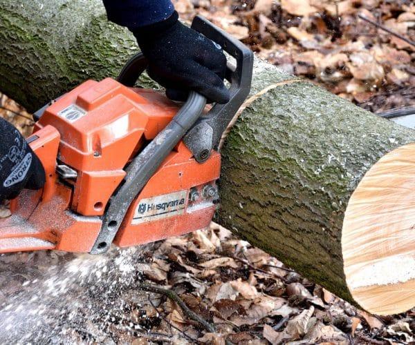 Matériel forestier : comment obtenir de l'outillage de qualité moins cher