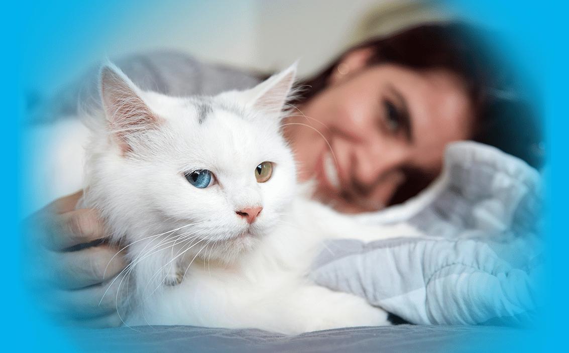 Comment assurer mon chat contre les maladies ?