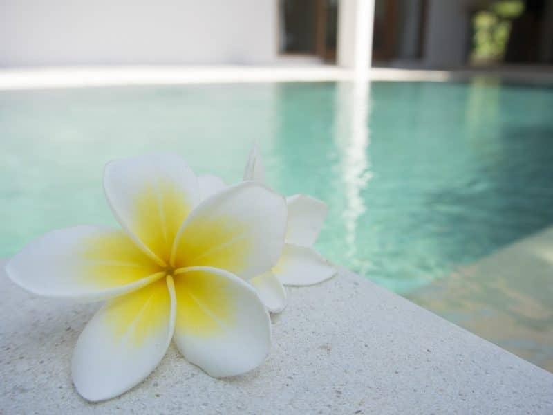 Comment entretenir parfaitement votre piscine ?